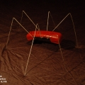 Ant Red Phone 01